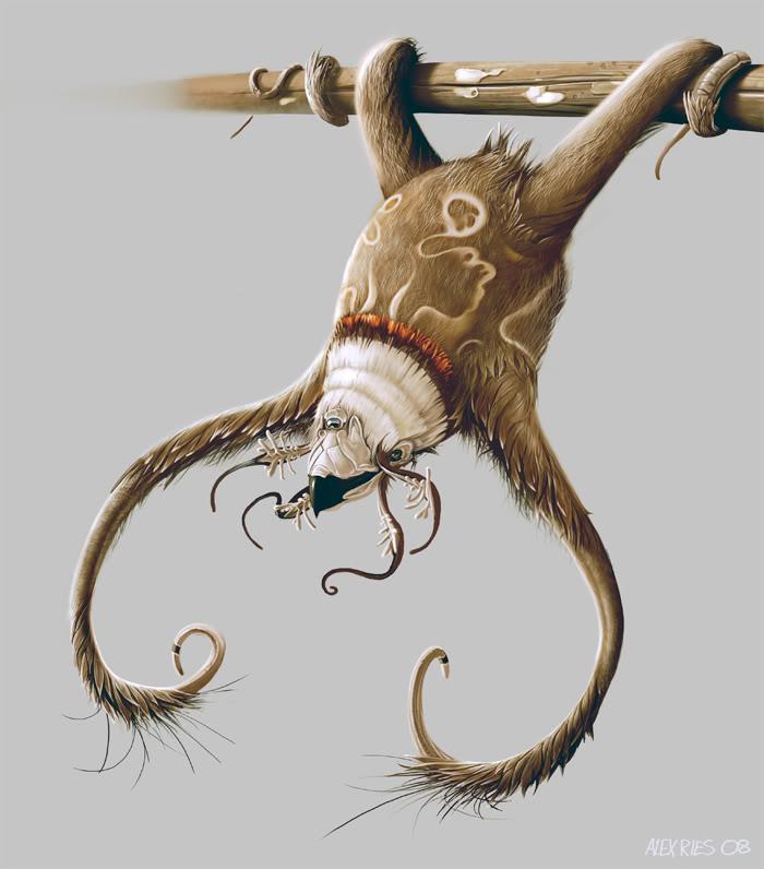 Blood Sloth - Enlightenment Universe